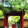 行時山光則寺 山門 #kamakura #鎌倉 #temple #flower #花 #寺 #hydrangea