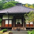 光則寺本堂 #kamakura #鎌倉 #temple #flower #花 #寺