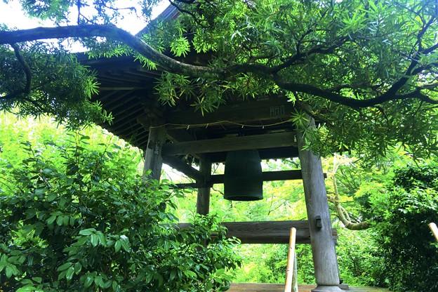 宝戒寺鐘楼 #鎌倉 #湘南 #寺 #花 #kamakura #temple