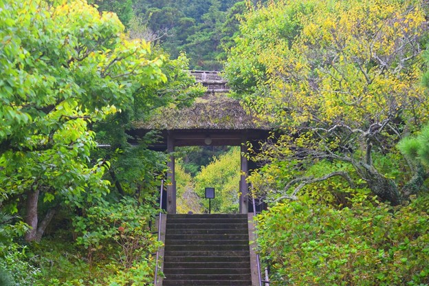 Photos: 松岡山東慶寺 山門 #湘南 #鎌倉 #寺 #花 #kamakura #temple #flower