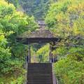 松岡山東慶寺 山門 #湘南 #鎌倉 #寺 #花 #kamakura #temple #flower