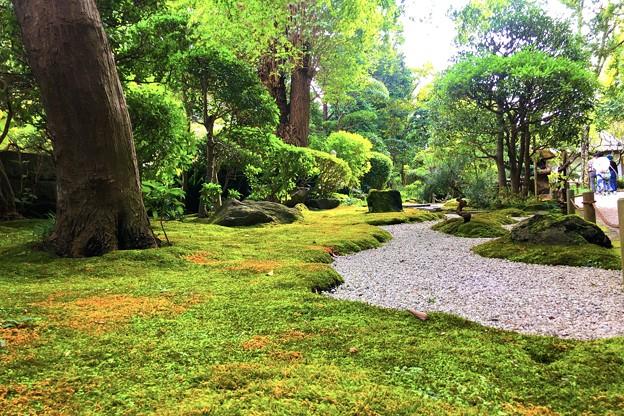 報国寺前庭園 #湘南 #鎌倉 #寺 #花 #kamakura #temple #flower