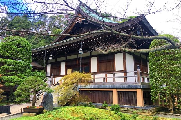 報国寺迦葉堂 #湘南 #鎌倉 #寺 #花 #kamakura #temple #flower