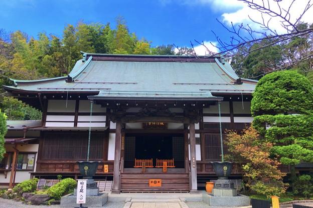 報国寺本堂 #湘南 #鎌倉 #寺 #花 #kamakura #temple #flower