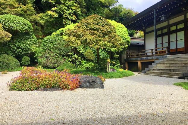 報国寺枯山水 #湘南 #鎌倉 #寺 #花 #kamakura #temple #flower