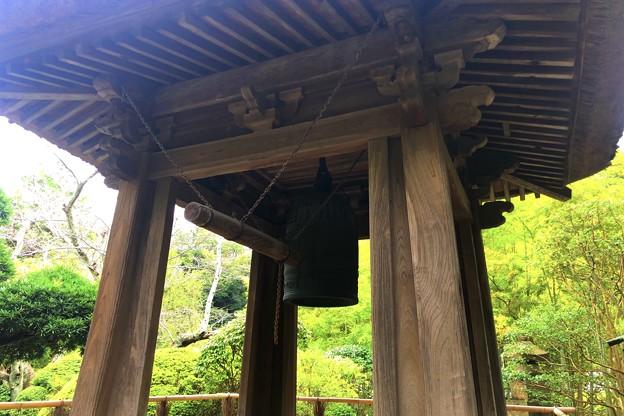報国寺鐘楼 #湘南 #鎌倉 #寺 #花 #kamakura #temple #flower