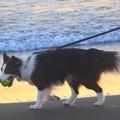 Photos: お散歩ワンコ@湘南・鵠沼海岸 #湘南 #藤沢 #海 #波 #wave #surfing #sea #animal #犬 #dog