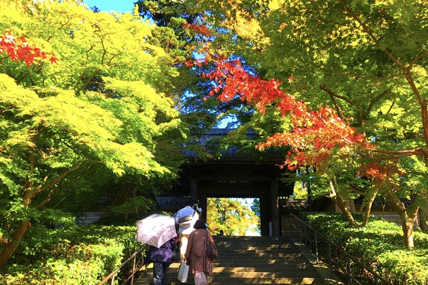 Photos: 瑞鹿山 円覚興聖禅寺 総門 #鎌倉 #湘南 #寺 #kamakura #北鎌倉 #temple #紅葉 #花 #flower #autumnleaves #円覚寺