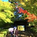 瑞鹿山 円覚興聖禅寺 総門 #鎌倉 #湘南 #寺 #kamakura #北鎌倉 #temple #紅葉 #花 #flower #autumnleaves #円覚寺