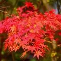 円覚寺の紅葉 #鎌倉 #湘南 #寺 #kamakura #北鎌倉 #temple #紅葉 #花 #flower #autumnleaves #円覚寺