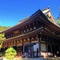 Photos: 円覚寺仏殿 #鎌倉 #湘南 #寺 #kamakura #北鎌倉 #temple #紅葉 #花 #flower #autumnleaves #円覚寺
