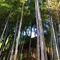 Photos: 円覚寺竹林 #鎌倉 #湘南 #寺 #kamakura #北鎌倉 #temple #竹林 #円覚寺