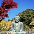 紅葉と鎌倉大仏 #湘南 #鎌倉 #寺 #紅葉 #autumnleaves #temple