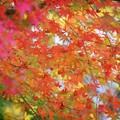 安国論寺の紅葉 #湘南 #鎌倉 #kamakura #寺 #temple #autumnleaves #紅葉 #黄葉 #mysky