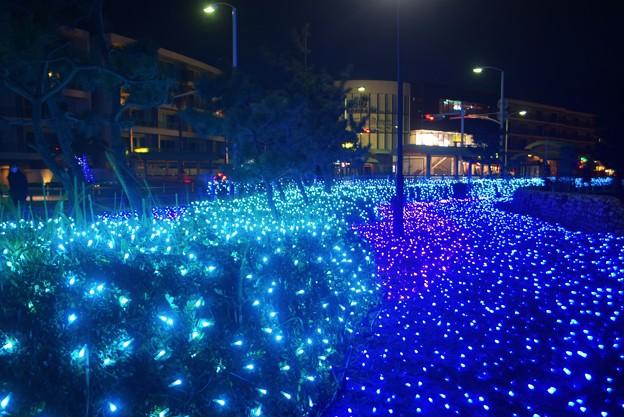 新江ノ島水族館のイルミネーション #湘南 #藤沢 #海 #波 #wave #surfing #イルミネーション #illumination
