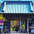 Photos: 長興山妙本寺 山門 #湘南 #鎌倉 #kamakura #寺 #temple #紅葉 #autumnleaves #mysky