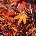 Photos: 妙本寺の紅葉 #湘南 #鎌倉 #kamakura #寺 #temple #紅葉 #autumnleaves #mysky
