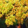 Photos: 色鮮やかな妙本寺の紅葉 #湘南 #鎌倉 #kamakura #寺 #temple #紅葉 #autumnleaves #mysky