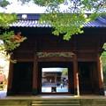 Photos: 妙本寺二天門 #湘南 #鎌倉 #kamakura #寺 #temple #紅葉 #autumnleaves #mysky