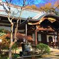 妙本寺本堂 #湘南 #鎌倉 #kamakura #寺 #temple #紅葉 #autumnleaves #mysky