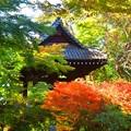 妙本寺鐘楼 #湘南 #鎌倉 #kamakura #寺 #temple #紅葉 #autumnleaves #mysky