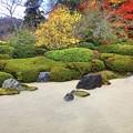 明月院枯山水 #鎌倉 #北鎌倉 #湘南 #明月院 #寺 #紅葉 #kamakura #temple #autumnleaves