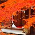 明月院後庭園からの丸窓 #鎌倉 #北鎌倉 #湘南 #明月院 #寺 #紅葉 #kamakura #temple #autumnleaves