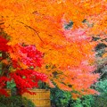 明月院後庭園の紅葉 #鎌倉 #北鎌倉 #湘南 #明月院 #寺 #紅葉 #kamakura #temple #autumnleaves