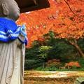 空を見上げる青地蔵@明月院 #鎌倉 #北鎌倉 #湘南 #明月院 #寺 #紅葉 #kamakura #temple #autumnleaves