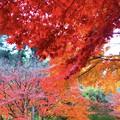 紅葉グラデーション@明月院 #鎌倉 #北鎌倉 #湘南 #明月院 #寺 #紅葉 #kamakura #temple #autumnleaves