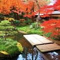 明月院後庭園 #鎌倉 #北鎌倉 #湘南 #明月院 #寺 #紅葉 #kamakura #temple #autumnleaves