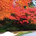 見頃の明月院後庭園の紅葉 #鎌倉 #北鎌倉 #湘南 #明月院 #寺 #紅葉 #kamakura #temple #autumnleaves