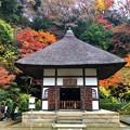 明月院開山堂 #鎌倉 #北鎌倉 #湘南 #明月院 #寺 #紅葉 #kamakura #temple #autumnleaves