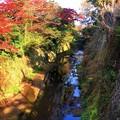 鎌倉幕府滅亡の地・東勝寺橋からの紅葉 #鎌倉 #神社 #shrine #紅葉 #autumnleaves #kamakura