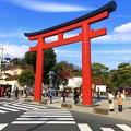 鶴岡八幡宮ニ之鳥居 #鎌倉 #神社 #shrine #紅葉 #autumnleaves #kamakura #鶴岡八幡宮