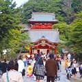 鶴岡八幡宮境内 #鎌倉 #神社 #shrine #紅葉 #autumnleaves #kamakura #鶴岡八幡宮