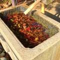 鶴岡八幡宮旗上弁財天社の手水舎 #鎌倉 #神社 #shrine #紅葉 #autumnleaves #kamakura #鶴岡八幡宮