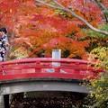 鶴岡八幡宮の紅葉 #鎌倉 #神社 #shrine #紅葉 #autumnleaves #kamakura #鶴岡八幡宮