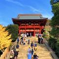 鶴岡八幡宮拝殿 #鎌倉 #神社 #shrine #紅葉 #autumnleaves #kamakura #鶴岡八幡宮