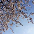 Photos: 春の光