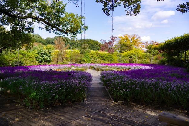 Photos: flower garden