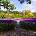 Photos: flower garden