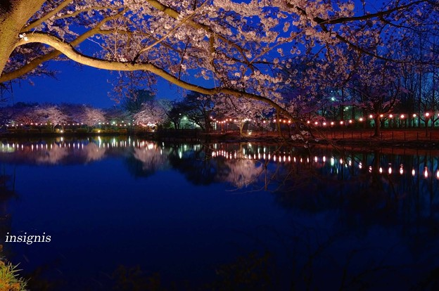 Photos: 花明かり.......