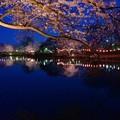 写真: 花明かり.......