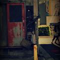 写真: 紅だった扉.......
