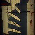 写真: 二重螺旋構造.......