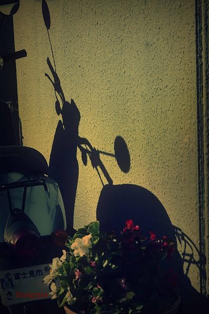 Photos: 花束を君に…