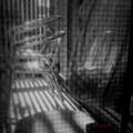 写真: 『第137回モノコン』Net over the net.......