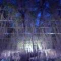 Photos: Purple rain.......