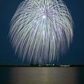 Photos: 渡良瀬に咲く2019.......